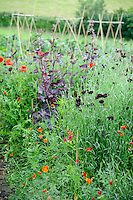 Pictorial Meadow - Volcanic Mix - including Red Clover, Red Flax, Purple Cornflower and Red Orache.