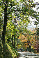 Cyclist travelling on a road among colorful trees during autumn, Ruy, Isère, France.