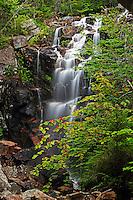Hadlock Falls, Acadia  #A75