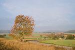 Europa, DEU, Deutschland, Hessen, Niederwalgern, Agrarlandschaft, Herbst, Baum, Herbstliche Farben, Kategorien und Themen, Natur, Umwelt, Landschaft, Jahreszeiten, Stimmungen, Landschaftsfotografie, Landschaften, Landschaftsphoto, Landschaftsphotographie, <br /> <br /> [Fuer die Nutzung gelten die jeweils gueltigen Allgemeinen Liefer-und Geschaeftsbedingungen. Nutzung nur gegen Verwendungsmeldung und Nachweis. Download der AGB unter http://www.image-box.com oder werden auf Anfrage zugesendet. Freigabe ist vorher erforderlich. Jede Nutzung des Fotos ist honorarpflichtig gemaess derzeit gueltiger MFM Liste - Kontakt, Uwe Schmid-Fotografie, Duisburg, Tel. (+49).2065.677997, <br /> archiv@image-box.com, www.image-box.com]