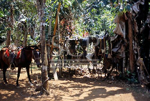 Osa Peninsula, Costa Rica. Lots of saddles slung over a wooden beam; one saddled horse.