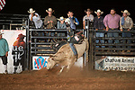 SEBRA - Danville, VA - 8.18.2017 - Bulls & Action