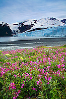 Harriman Glacier, Harriman Fiord, Prince William Sound, Chugach National Forest, Alaska.