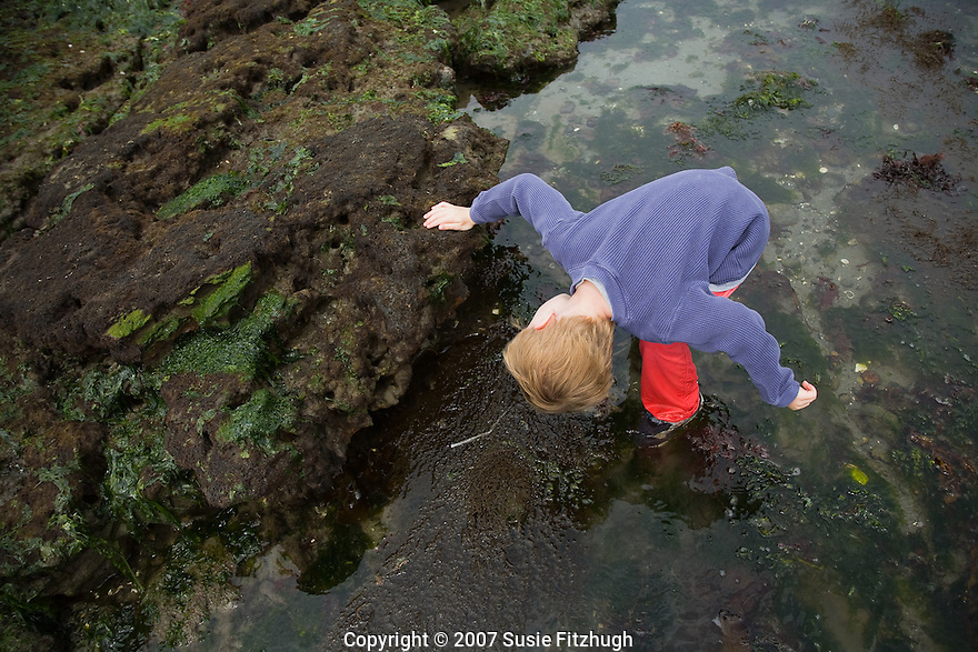 Looking for the creatures that are only revealed during summertime's lowest tides (Alki Beach, Seattle WA)