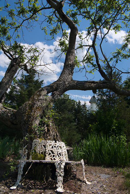 Garden bench wrapped around large tree trunk, blue sky