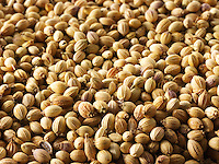 Coriander seeds. Stock Photos