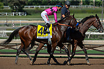 """ARCADIA, CA. SEPTEMBER 29: #4 Game Winner, ridden by Joel Rosario,  in the post parade of the American Pharoah Stakes (Grade l) """"Win and You're In Breeders' Cup Juvenile Division"""" on September 29, 2018 at Santa Anita Park in Arcadia, CA. (Photo by Casey Phillips/Eclipse Sportswire/CSM)"""