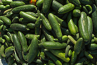Crate of fresh cucumbers, Quoseir Village, Red Sea, Egypt.