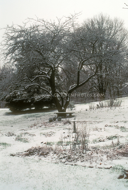 Winter Garden, with large deciduous tree, sundial, snow, bare branches, garden bench, in wide view of home backyard