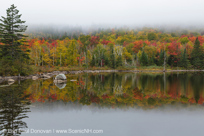 Zealand Pond in Bethlehem, New Hampshire USA on a foggy autumn morning. This pond is located on the side of the Zealand Trail.