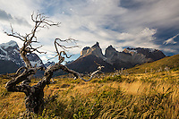 Lenga trees at Torres del Paine, Chile