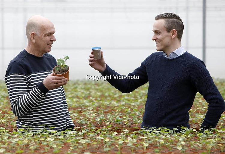 """Foto: VidiPhoto<br /> <br /> BRUCHEM – Peter van Wijgerden van Van Wijgerden Primula's uit Bruchem samen met een adviseur van DCM. Het concept van pionier Peter van Wijgerden -hij bedacht in het verleden ook andere niche producten- is een enorm succes en de vraag stijgt nog steeds. Een uniek initiatief ook. Waar andere producenten van eetbare bloemen ze oogsten en verpakken, levert de Bruchemse kweker ze met verhaal en recept, life in de pot. De consument heeft zo van begin mei tot eind september (levertijd) een smakelijk maar ook fleurig plantje op tafel. """"Want je eet voor 80 procent met je ogen."""""""