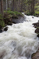 Spring runoff, Fern Creek, Rocky Mountain National Park