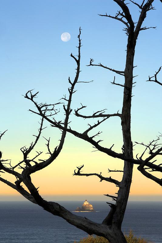 Tillamook Rock Lighthouse and dead tree with full moon. Oregon