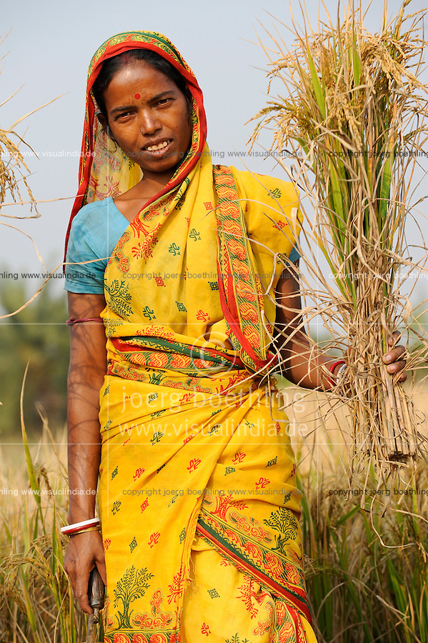 INDIA West Bengal, Dalit woman harvest rice for community rice bank in village Kustora / INDIEN Westbengalen , Dorf Kustora , Reisernte , Dalit Frauen betreiben gemeinsam eine Reisbank zur Ueberbrueckung von Ernteausfaellen und bei Nahrungsverknappung , gefoerdert durch LWS Indien, Frau Paul  - NUR FÜR REDAKTIONELLE NUTZUNG, Kein PR !