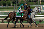 """ARCADIA, CA. SEPTEMBER 29: #5 Sigalert, ridden by Tyler Baze,  in the post parade of the American Pharoah Stakes (Grade l) """"Win and You're In Breeders' Cup Juvenile Division"""" on September 29, 2018 at Santa Anita Park in Arcadia, CA. (Photo by Casey Phillips/Eclipse Sportswire/CSM)"""