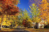 Deerfield, MA, Massachusetts, The Berkshires, Colorful maple trees along The Street in Historic Deerfield in the autumn.