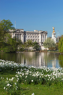 Great Britain, England, London: Buckingham Palace from across St James's Park Lake with Spring Daffodils, gold plated Victory atop the Queen Victoria Memorial   Grossbritannien, England, London: Buckingham Palast und Saint James's Park im Fruehling mit weissen Narzissen, vergoldete Victory Statue auf dem Queen Victoria Memorial