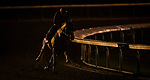 October 31, 2020: Chaos Theory, trained by trainer John W. Sadler, exercises in preparation for the Breeders' Cup Turf Sprint at Keeneland Racetrack in Lexington, Kentucky on October 31, 2020. Alex Evers/Eclipse Sportswire/Breeders Cup
