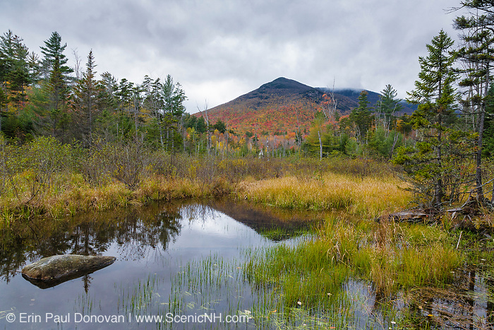 Wetlands area along the Franconia Brook Trail during the autumn months in the Pemigewasset Wilderness of Lincoln, New Hampshire. Storm clouds can be seen over the southern end of Owls Head is in the distance. A spur line of the old East Branch & Lincoln Logging Railroad (1893-1948) traveled through this area.