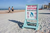 Signs inform beachgoers not to disturb the area wildlife on Daytona Beach,Florida. Atlantic Ocean (do)