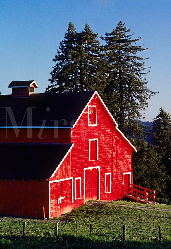 Classic RED BARN & Redwood trees in the SANTA CRUZ MOUNTAINS - CALIFORNIA