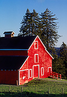 Classic RED BARN & Redwood trees in the SANTA CRUZ MOUNTAINS - CALIFORNIA