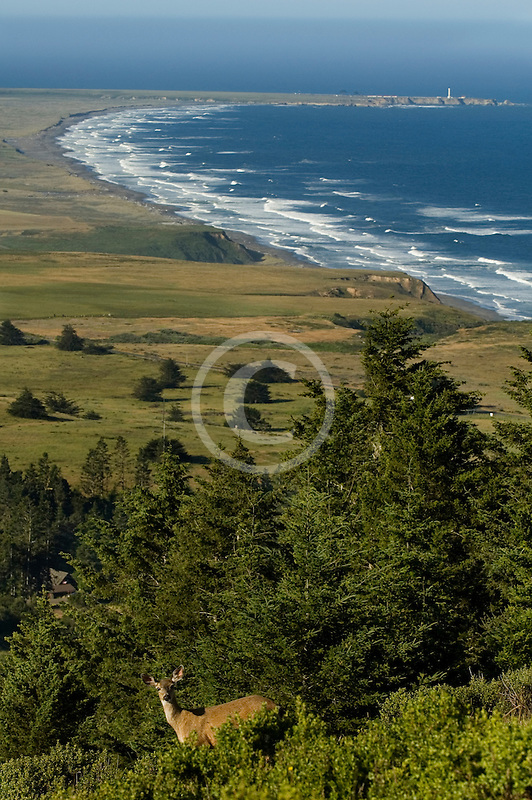 California, Point Arena, Manchester State Park. elevated view, with deer