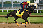 LOUISVILLE, KY - MAY 04: Danzing Candy, trained by Clifford Sise, Jr. and owned by Halo Farms, Bashor, Jim and Bashor, Diane, exercises and prepares during morning workouts for the Kentucky Derby and Kentucky Oaks at Churchill Downs on May 4, 2016 in Louisville, Kentucky.(Photo by Samantha Bussanch/Eclipse Sportswire/Getty Images)