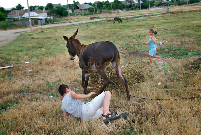 REPUBLIC OF MOLDOVA, Gagauzia, Vulcanesti, 2009/06/29..Children playing with the donkeys at the exit of the village of Vulcanesti..© Bruno Cogez..REPUBLIQUE MOLDAVE, Gagaouzie, Vulcanesti, 29/06/2009..Des enfants jouent avec les enes e la sortie du village de Vulcanesti..© Bruno Cogez