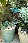 "In this blue-green motif, stones, corks, and aqua-colored tumbled glass share the mulching duties and mimic the colors of, among others, Hens-and-chicks 'Lavender and Old Lace' (left ""cork"" pot, bottom left), silver thyme (left ""cork"" pot, right side and rear copper pot, left side), Phormium 'Jack Spratt'  (left ""cork"" pot, tall middle), Euphorbia 'Glacier Blue' (right ""stones"" pot, tall middle), and Ajuga 'Black Scallop' (right ""stones"" pot, low right)."
