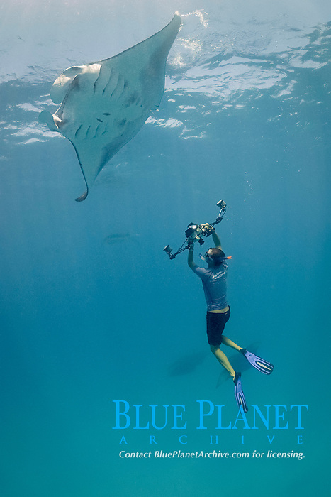 manta ray researcher, Guy Stevens, taking photos of unique individual markings - belly spots, used to identify reef manta rays, Mobula alfredi, that are feeding on plankton in Hanifaru Bay, Baa Atoll, Maldives, Indian Ocean