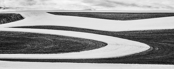 Panoramic black and white abstract image of wheat field in Palouse region of Washington.