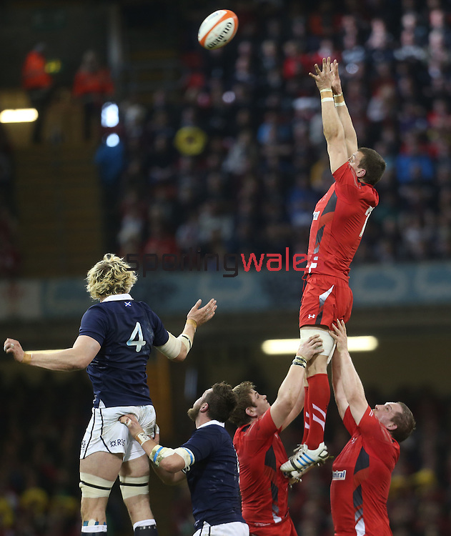 Wales captain Sam Warburton takes the line out ball.<br /> RBS 6 Nations 2014<br /> Wales v Scotland<br /> Millennium Stadium<br /> <br /> 15.03.14<br /> <br /> ©Steve Pope-SPORTINGWALES