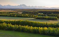 Combine harvests barley grain in Delta Junction, Alaska Range mountains in the distance, Interior, Alaska.