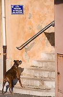 Europe/France/Provence-Alpes-Côte d'Azur/13/Bouches-du-Rhône/Marseille: Chien et  Escalier du vallon des Auffes