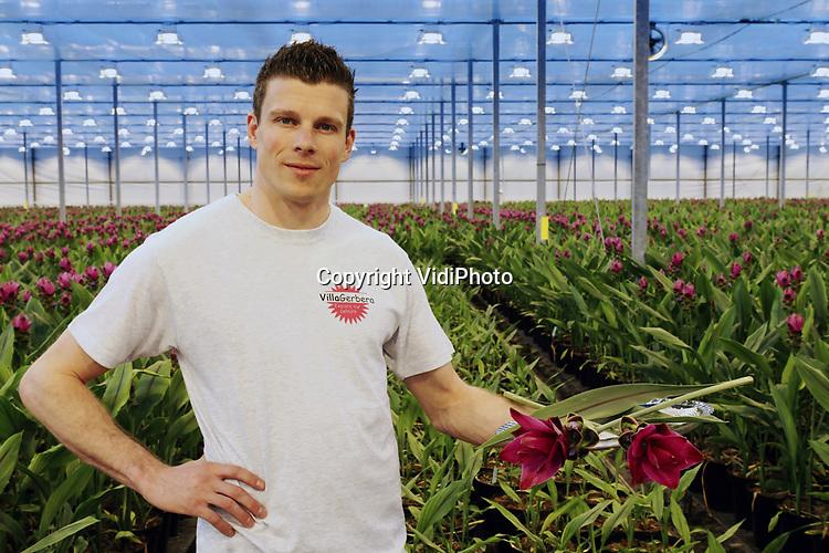 """Foto: VidiPhoto<br /> <br /> HONSELERSDIJK – Het komt uit Thailand, is een smaak- en kleurversterker en onmisbaar in de currie. Weinig consumenten weten echter dat de curcuma (of kurkuma) niet alleen een wortel is, maar veredeld ook een exclusieve en kloeke potplant en snijbloem. Bij Villa Curcuma in Honselersdijk worden er jaarlijks zo'n 800.000 stelen in zeven kleurschakeringen geoogst, vertelt Mike Zuidgeest. Samen met zijn vader André runt hij het 2,5 ha. grote bedrijf, dat op dit moment nog slechts voor een deel gevuld is met de 'tropische verrassing' onder Hollands glas. Uitbreiding zit er aan te komen, terwijl op een andere locatie op 3,5 ha. ook nog eens gerbera's worden gekweekt. Als enige in Nederland snijden ze -straks wellicht ook jaarrond- de eenjarige tropische bloem die dagelijks veel licht moet hebben. """"We hebben veel zelf moeten uitvinden. De bloem is koudegevoelig en heeft in de kas veel onderhoud nodig. Uitgangsmateriaal is lastig verkrijgbaar. Op de vaas in het boeket is de curcuma vanwege zijn robuuste omvang een echte eye catcher."""""""