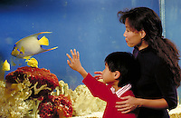 KOREAN-AMERICAN MOTHER AND SON CHOOSING FISH IN A RETAIL PET STORE. MOTHER AND SON. OAKLAND CALIFORNIA USA PARK.
