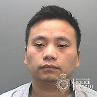"""Pictured: Long Pham<br /> Re: The ringleaders of a Vietnamese crime gang have been jailed after police seized 2.5 tonnes of cannabis worth about £6m in raids across south Wales.<br /> A total of 21 people have been sentenced in a case going back to 2017 after dozens of cannabis factories were uncovered across the region and beyond.<br /> One of the defendants initially claimed to be 14 years old, but police proved he was actually aged 26.<br /> The gang leaders were sentenced at Merthyr Tydfil Crown Court on Friday.<br /> Bang Xuan Luong, 44, was sentenced to eight years in prison. His partner, 42-year-old Vu Thi Thu Thuy, was jailed for six years and Tuan Anh Pham, 20, who was described in court as the """"IT Man"""", received five years.<br /> An investigation into a cannabis factory in the Cynon Valley led officers from South Wales Police's Force Intelligence and Organised Crime Unit (FIOCU) to a string of others across south Wales, Gwent and Dyfed-Powys force areas."""
