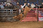SEBRA - Beckley, WV - 1.18.2014 - Bulls & Action
