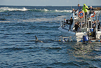 Great White Shark (Carcharodon carcharias) dorsal fin swimming by boat with diving cage, Gansbaii, Dyer Island, South Africa