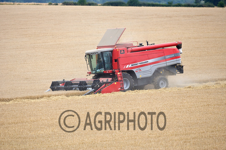 Massey Ferguson Combine harvesting malting Barley in Rutland.Picture Tim Scrivener date taken 25th July  2011 .mobile 07850 303986 e-mail tim@agriphoto.com.....covering Agriculture in The United Kingdom.....