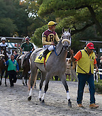 Devil May Care wins $400,000 Frizette Stakes at Belmont Park on Saturday, Oct. 10, 2009, upsetting Matron winner Awesome Maria. Todd Pletcher trains the winner for Glencrest Farm and John Greathouse.