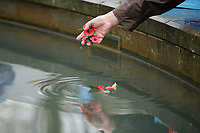 Pictured: A woman places a poppy in the fountain. Saturday November 2017<br /> Re: Armistice Day, two minutes were observed to mark remembrance at Castle Square in Swansea, Wales, UK.