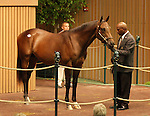 12 September 2010.  Hip #40 A.P. Indy - Friendly Michelle colt sold for $600,000 at the Keeneland September Yearling Sale.  Consigned by Taylor Made Sales.