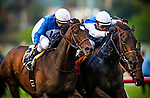 Silentio (center, white cap) ridden by Rafael Bejarano narrowly defeats Summer Front ridden by Joe Bravo to win the Citation Handicap on November 29, 2013 at Betfair Hollywood Park in Inglewood, California .(Alex Evers/ Eclipse Sportswire)