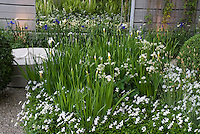 White flowered garden with night lighting