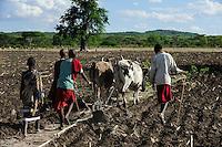 TANZANIA Kondoa, village Mombose , adoption of climate change, Masai who are usually cattle breeder, plough field with ox for crop cultivation / TANSANIA Kondoa, Dorf Mombose, Anpassung an den Klimawandel, Massai die urspruenglich Viehzuechter waren, pfluegen ein Feld fuer den Anbau von Nahrungspflanzen