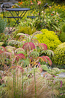 Meianthus major (Honey Bush) with Mexican feather grass (foreground) and Euphorbia sequierani niciciana in cottage garden. Sally Robertson Garden.