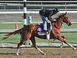 Flashy Ways, trained by Richard Baltas,exercises in preparation for the upcoming Breeders Cup at Santa Anita Park on October 31, 2012.